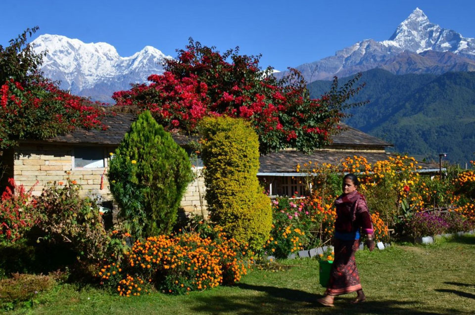 Everything you need to know about Dhampus Trek